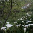 Vale do Lajeado Chalés