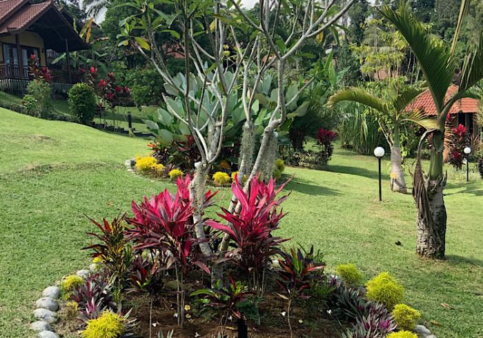 Bali Palms Tabanan Indonesia Best Price Guarantee